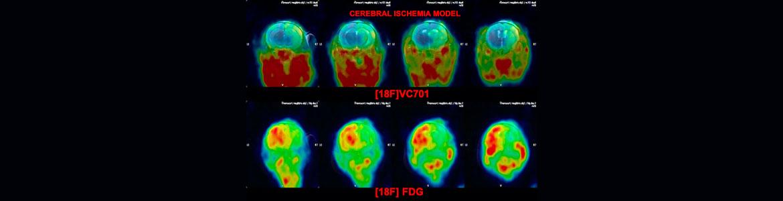 Cerebral-Iscemia-Model